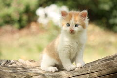 Happy white red kitten resting on the stump Royalty Free Stock Photography