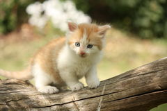Happy white red kitten resting on the stump Stock Photo