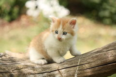 Happy white red kitten resting on the stump Royalty Free Stock Photos