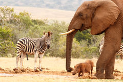 The happy wild animals. At the watering hole stock photo