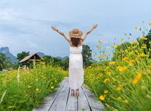 Woman with arm raised on wooden bridge with yellow cosmos flower field stock images