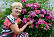 The happy woman of average years near a blossoming hydrangea in Stock Photos
