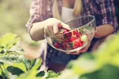 Happy woman collecting fresh strawberries in the garden Stock Photo