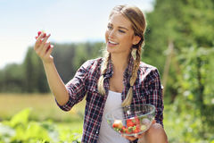 Happy woman collecting fresh strawberries in the garden Stock Images