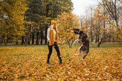 Happy woman and dog husky playing together. Outdoor Royalty Free Stock Image