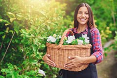 Happy woman enjoying her work at the nursery. Standing outdoors in a garden, clutching a wicker basket full of fresh white flowers for sale in the florist shop Royalty Free Stock Image
