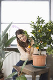 Happy Woman Examining Orange Growing On Plant Royalty Free Stock Images