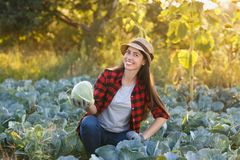 Happy woman gardener with cabbage. Happy young woman gardener with cabbage in garden. Young farmer harvesting cabbage. Gardening, agriculture, autumn harvest Royalty Free Stock Photo