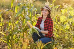 Happy woman gardener with corn cob. Portrait of happy young woman gardener with corn cob in garden. Young farmer harvesting corn . Gardening, agriculture, autumn Royalty Free Stock Image