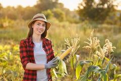 Happy woman gardener with corn cob Stock Image