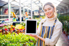Happy woman gardener holding blank screen tablet in greenhouse. Happy attractive young woman gardener in striped apron standing in greenhouse and holding blank Stock Photo