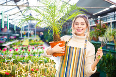 Happy woman gardener holding palm and fork for transplantation plants. Happy attractive woman gardener in apron holding small palm in pot and fork for Stock Images