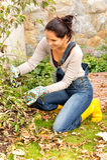 Happy woman gardening bush fall backyard kneeling Royalty Free Stock Photo
