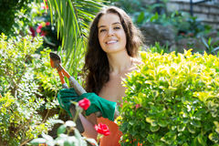 Happy woman  in gardening. Happy casual dressed woman with pruner in yard gardening with roses Royalty Free Stock Photos