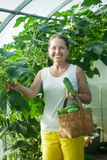 Happy woman with harvested cucumbers Royalty Free Stock Image