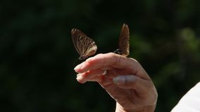 Happy woman holding butterfly stock video footage