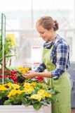 Happy woman holding flowers in greenhouse Royalty Free Stock Image
