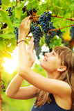 Happy woman is holding a grape bunch on a vine with bright sun s Stock Image