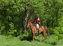 Happy woman on a horse ride in forest Royalty Free Stock Image