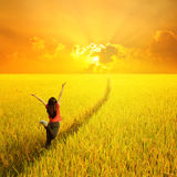 Happy woman jumping in yellow rice field and sunset Royalty Free Stock Photos