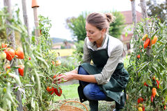 Happy woman knilling in garden Stock Photos