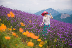 Happy woman in lavender field stock photos