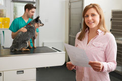Happy Woman Looking At Bill In Veterinary Surgery Stock Photo