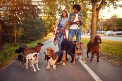 Happy woman and man dog walker with dogs enjoying in walk stock photos