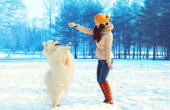 Happy woman owner with white Samoyed dog playing in winter Royalty Free Stock Photo