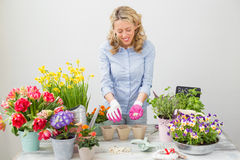 Happy woman planting seeds in little pots Stock Image