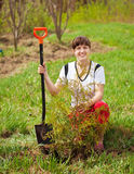 Happy woman planting thuja Stock Images