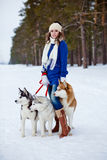 Happy woman playing with siberian husky dogs in winter forest Stock Images