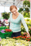 Happy woman with shopping basket choosing flowers. People, gardening, shopping, sale and consumerism concept - happy woman with basket choosing and buying Stock Images
