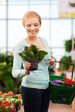 Happy woman with shopping basket choosing flowers Royalty Free Stock Image