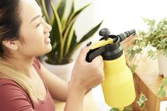 Happy woman spraying houseplants royalty free stock images