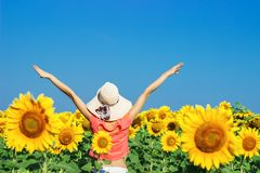 Happy woman with straw hat in sunflower field.  Stock Photo