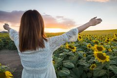 Happy woman in sunflower field. Summer girl in flower field cheerful. Asian Caucasian young woman raise arm OK and freedom show in Royalty Free Stock Image