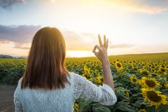 Happy woman in sunflower field. Summer girl in flower field cheerful. Asian Caucasian young woman raise arm OK and freedom show in Stock Photos