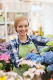 Happy woman taking care of flowers in greenhouse Stock Image
