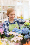 Happy woman taking care of flowers in greenhouse Stock Images