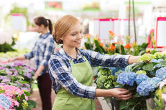 Happy woman taking care of flowers in greenhouse Royalty Free Stock Image