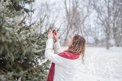 Happy woman taking picture of snow falling on pine tree with sma. Happy woman standing oute holding smartphone taking picture of snow falling on pine tree branch Royalty Free Stock Image