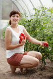 Happy  woman with tomato harvest Royalty Free Stock Image