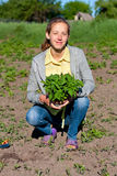 Happy Woman with Tomato Seedlings in the Garden Royalty Free Stock Photography