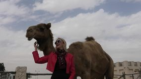 Woman touches camel. Happy woman touches and interacts with a camel in Doha city downtown, near Souq Waqif, the old market in Qatar. Caucasian tourist traveler stock video footage