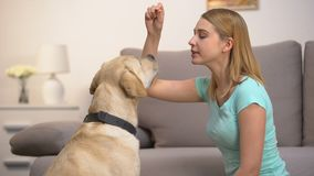 Happy woman training dog and giving food, teaching pet to bark, discipline. Stock footage stock video footage