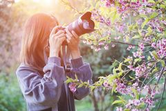 Happy woman traveler take photos by camera with cherry blossoms tree on vacation while spring stock images
