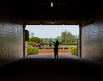 Happy Woman in Tunnel As Horse Runs Past royalty free stock photography