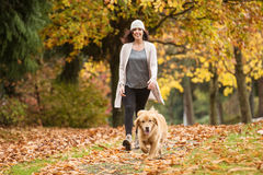 Happy woman walking her Golden Retriever Dog in a park with Fall Stock Photos
