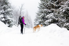 Happy woman walking in winter forest with dog Royalty Free Stock Image